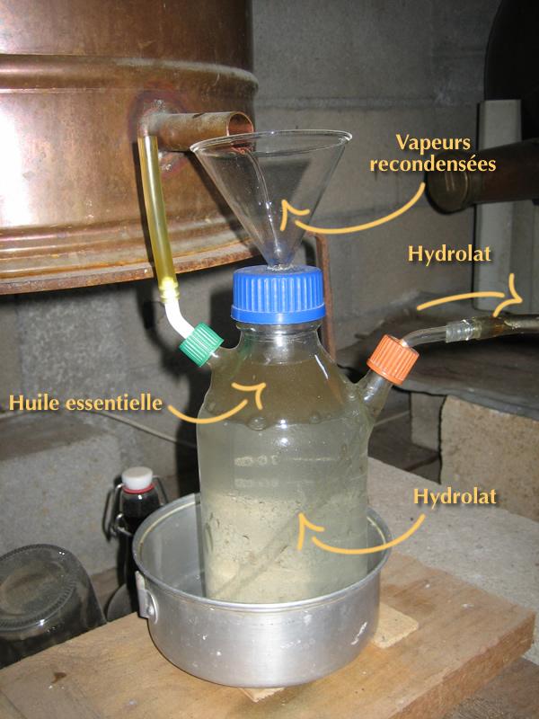 essencier montrant la séparation hile essentielle/eau florale