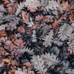 Foires d'automne