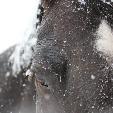 Utiliser les hydrolats pour soigner nos animaux