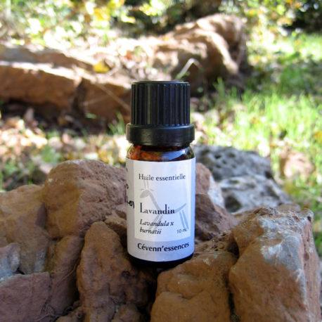 huile essentielle de lavandin cevennessences